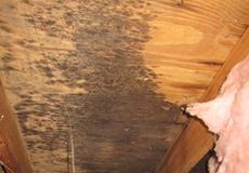 mold damage repairs Ridgecrest NC