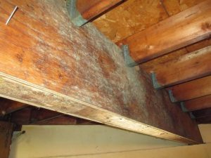 mold removal contractors Horse Shoe NC