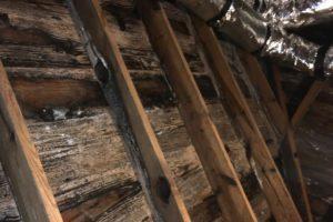 mold removal company Asheville NC